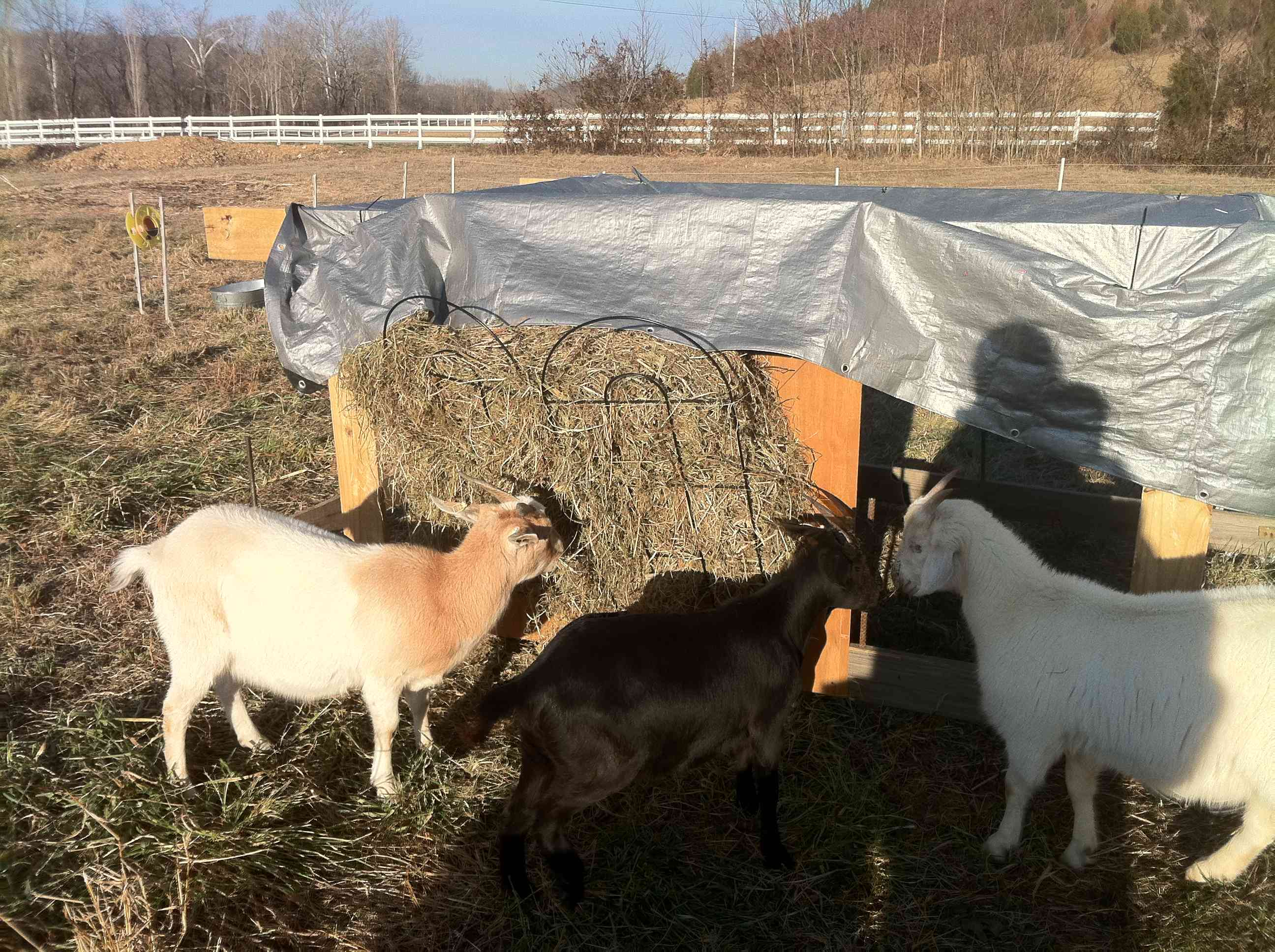 goats and sheep for same eat the feeder bale thing all feeders round best homemade horses hay of llamas